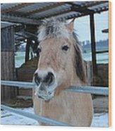 Winter Horse Wood Print