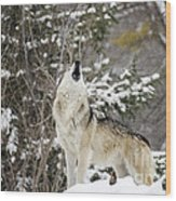 Winter Howl Wood Print