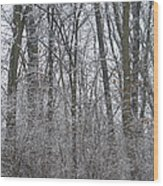 Winter In The Heartland 8 Wood Print