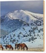 Winter In The High Desert  Wood Print by Jeanne  Bencich-Nations