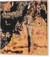 Winter In The Vineyard Wood Print