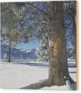 Winter In Yellowstone National Park Wood Print