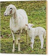 Winter Lamb And Ewe Wood Print
