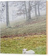 Winter Lamb Foggy Day Wood Print