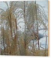 Winter Lasting Wood Print
