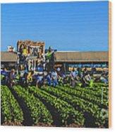Winter Lettuce Harvest Wood Print