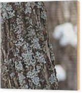 Winter Lichen Wood Print by Elizabeth Sullivan