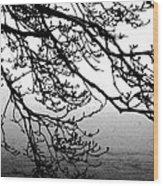Winter Magnolia Wood Print