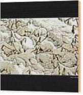 Winter Marigolds Wood Print