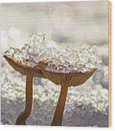 Winter Mushrooms Wood Print