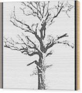 Winter Oak Art Wood Print