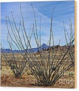 Winter Ocotillo Garden Wood Print