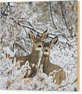 Winter Pair Wood Print