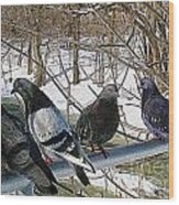 Winter Pigeon Party Wood Print