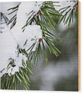 Winter Pine Branches Wood Print