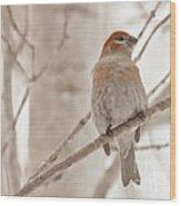 Winter Pine Grosbeak Wood Print