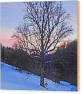 Winter Poplar Tree Wood Print