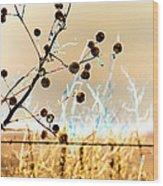 Winter Prairie Wood Print