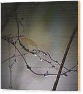 Winter Raindrops Wood Print