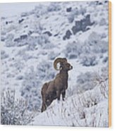 Winter Ram Wood Print