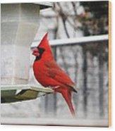Winter Red Bird Wood Print