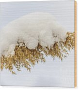 Winter Reed Under Snow Wood Print