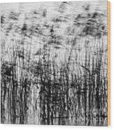 Winter Reeds Wood Print