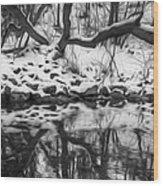 Winter Reflection Wood Print