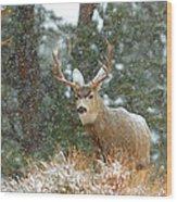 Winter Returns Wood Print