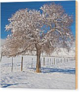 Winter Season On The Plains Portrait Wood Print