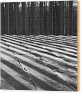 Winter Shadows Wood Print