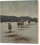 Winter Sheep Wood Print