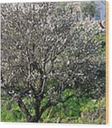 Winter Spanish Nature Almeria Region  Wood Print