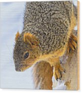 Winter Squirrel Wood Print