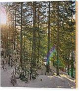 Winter Sun Flares Wood Print