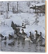 Winter Swimming Hole Wood Print
