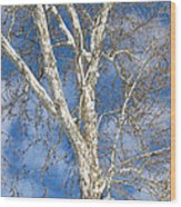 Winter Sycamore Wood Print