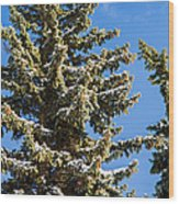 Winter Tale - Featured 3 Wood Print