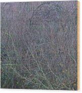 Winter Tangle II Wood Print