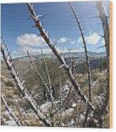 Winter Thorns Wood Print
