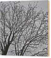 Winter Tree 6 Wood Print