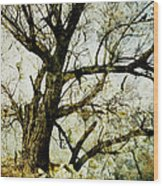 Winter Tree At The  Lake Shore  Wood Print by Ann Powell