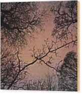Winter Tree Canopy Wood Print