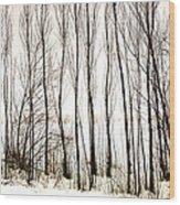 Winter Tree Fence 13283 Wood Print