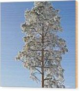 Winter Tree Germany Wood Print