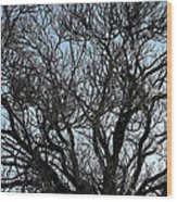 Winter Tree Hill End Nsw Wood Print by Ian  Ramsay