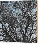 Winter Tree Hill End Nsw Wood Print
