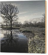 Winter Tree On The River Culm Wood Print