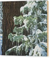 Winter Tree Sierra Nevada Mts Ca Usa Wood Print
