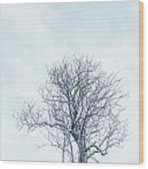 Winter Tree Wood Print